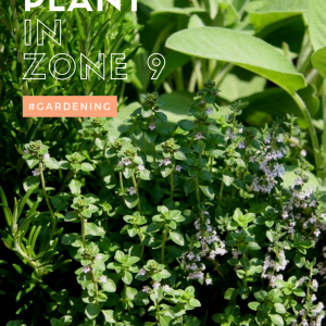 What to plant in zone 9 in spring - gardening for Houston