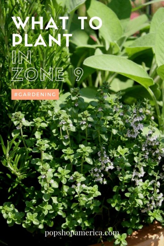 What-to-plant-in-zone-9-in-spring-gardening-for-Houston
