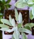 herbs that grow well in houston what to plant in houston this spring