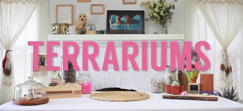 Terrariums Video Still | Title Screen for How to Make a Succulent Terrarium Instructional Video by Pop Shop America