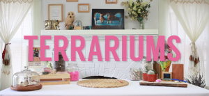 Terrariums Video Still | Title Screen for How to Make a Succulent Terrarium Instructional Video by Pop Shop America