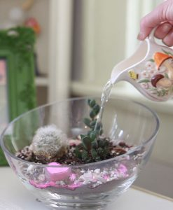 How to Water a Succulent Terrarium from the How to Build a Glass Terrarium Video by Pop Shop America | Read More about Cactus and Succulents on the Pop Shop America Blog