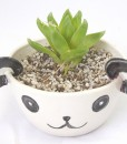 panda planter with succulent handmade porcelain ceramics shop at pop shop america