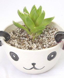 panda animal planter with succulent available for purchase at pop shop america