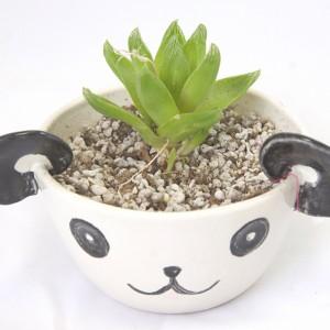 panda planter with succulent handmade porcelain ceramics shop at pop shop america