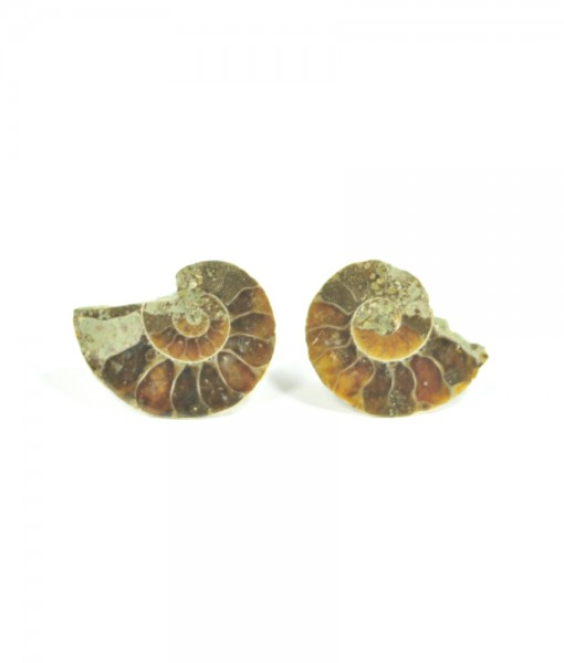 Ammonite - Fossilized Shell - Stud Earrings