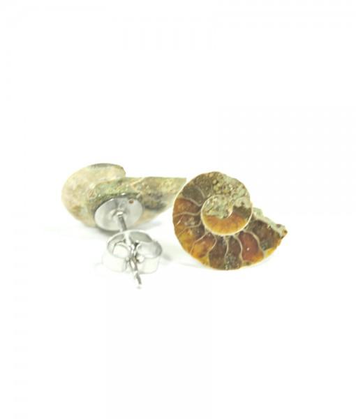 Ammonite Stud Earrings