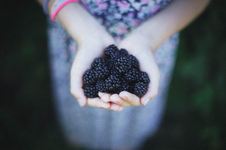 blackberry sorbet recipe pop shop america