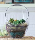 Large Terrarium with Cactus
