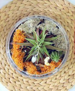 medium sized glass terrarium from Pop Shop America | Succulent Terrarium Valentine's Alternatives Event at New Living Bedroom