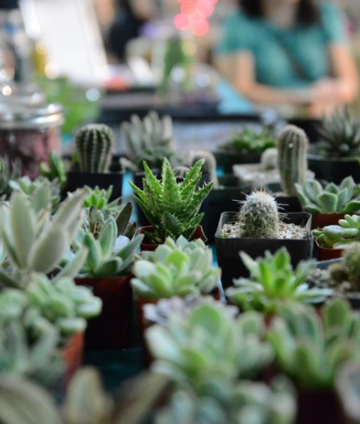 plants | Succulent Terrariums Glass Terrarium Bar by Pop Shop America