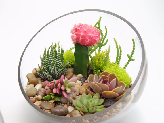 succulent terrarium by bliss gardens boutique etsy shop