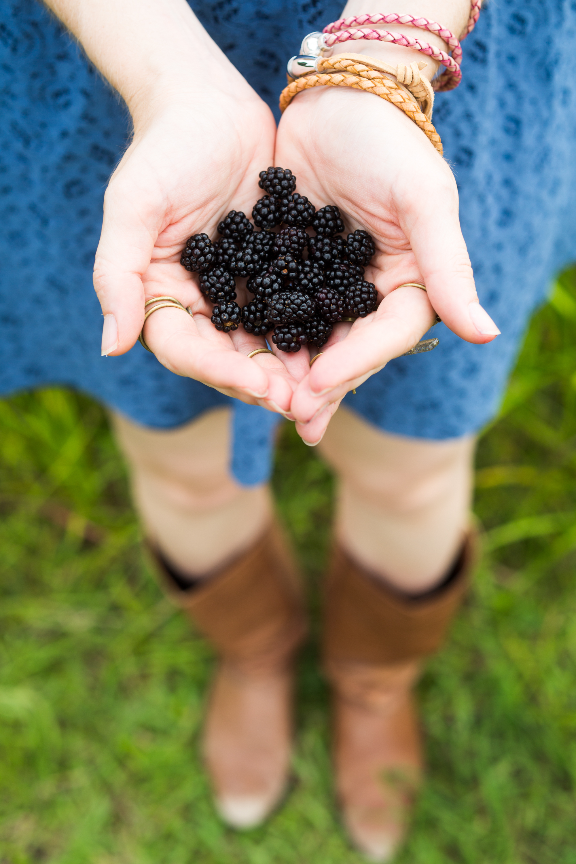a handful of dewberries wild blackberries texas