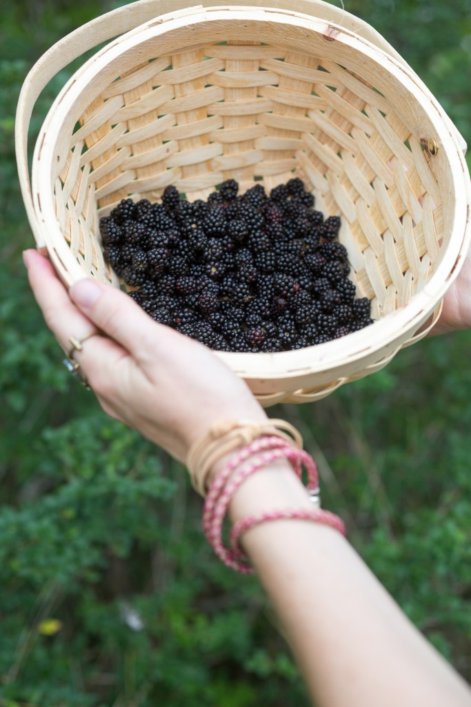 the bounty of dewberries berry picking how and where to pick dewberries texas