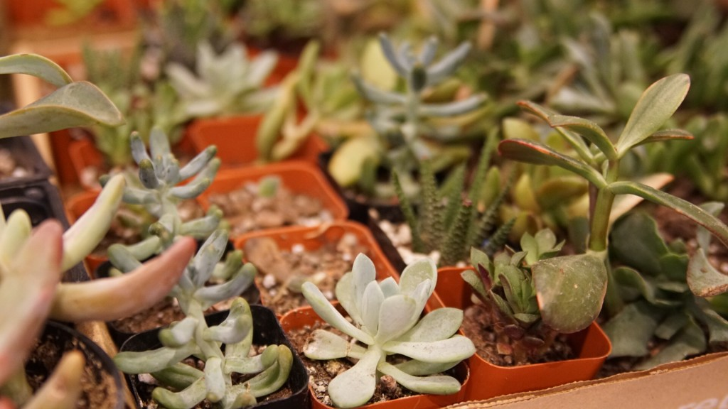 all the succulents and cactus for succulent terrariums jonathan adler store