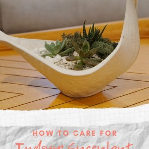 how to care for indoor succulent terrariums pop shop america