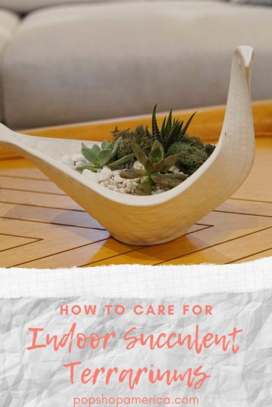 how to care for indoor succulent terrariums pop shop america