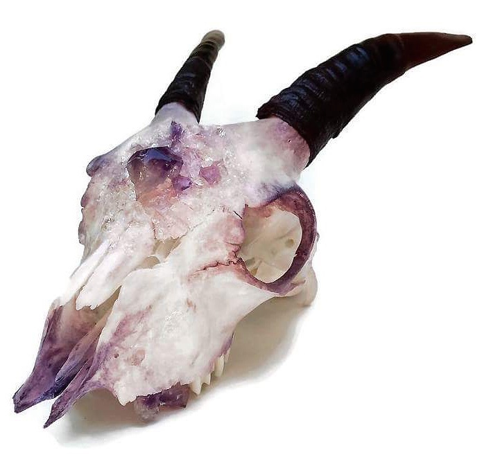 Kristin Jarvis Taxidermy Crystalized Fairy Goat Skull