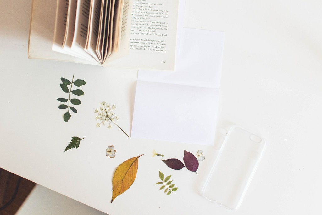 dried pressed flowers for phone case diy