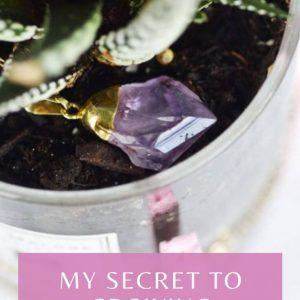 secret-to-growing-succulents