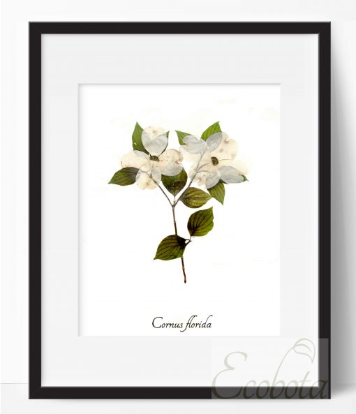 dogwood-botanical-print-pressed-flower-art-print