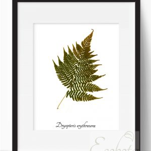 fern-botanical-print-pressed-fern-art-print