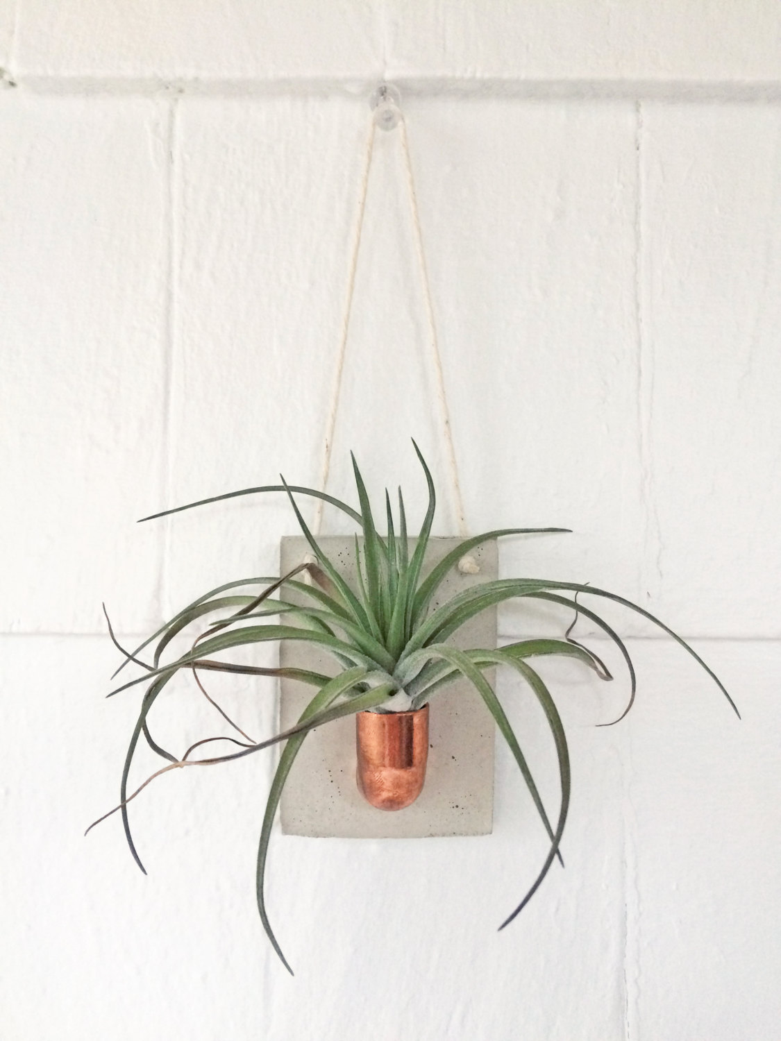 Copper and concrete wall planter air plant holder for Diy wall plant holder