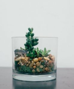 short round glass terrarium pop shop america