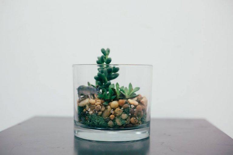 short round glass terrarium pop shop america