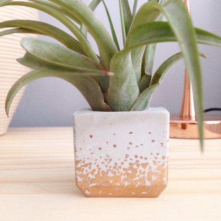 close up of mini square concrete planter