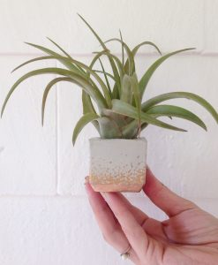 concrete mini square planter