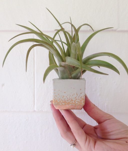 concrete mini square planter