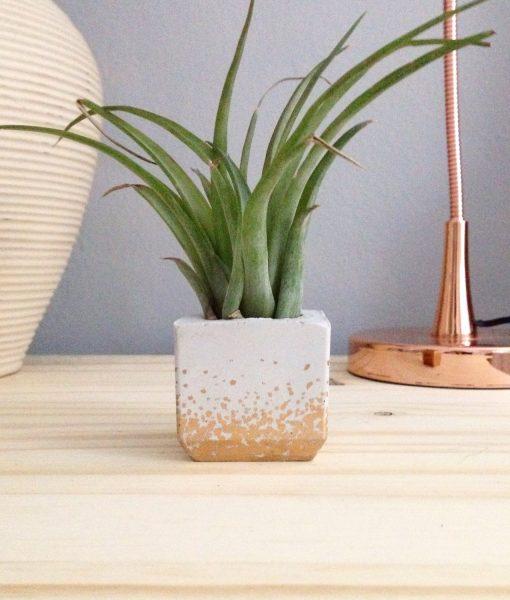 gold polka dot concrete planter