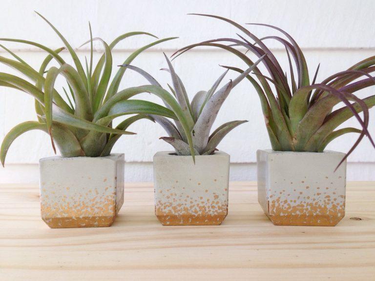 mini concrete planter with gold leaf