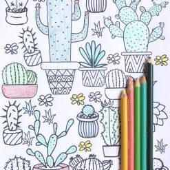 succulent adult coloring pages hero pop shop america
