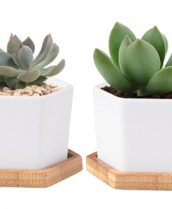 hexagon terrarium planter with bamboo tray