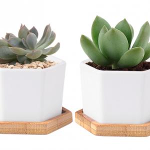 hexagon terrarium planter with bamboo tray
