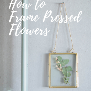 how to frame pressed flowers pop shop america