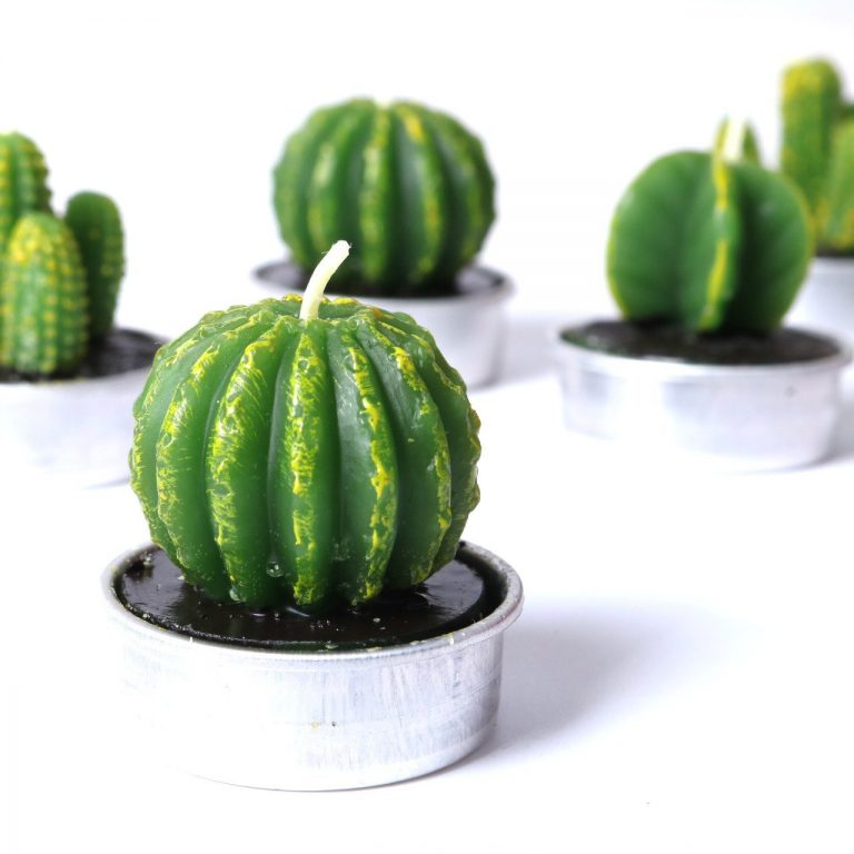 mini cactus candle sets 6 pack candles