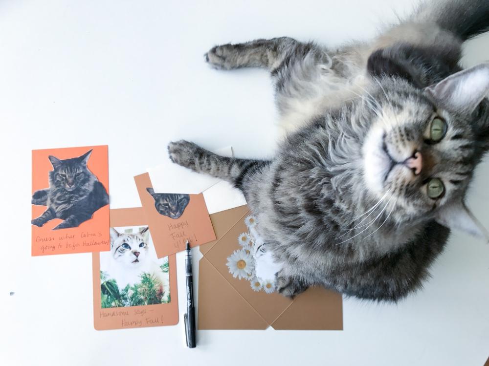 #shop cobra with fall cat cards diy pop shop america