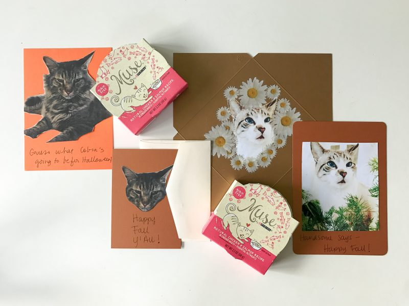 #shop make these diy fall cards with your cats