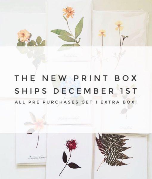 new print subscription box pop shop america graphic