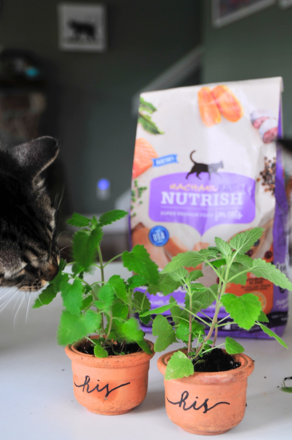 hero-hand-lettered-catnip-planters-rachael-ray-nutrish