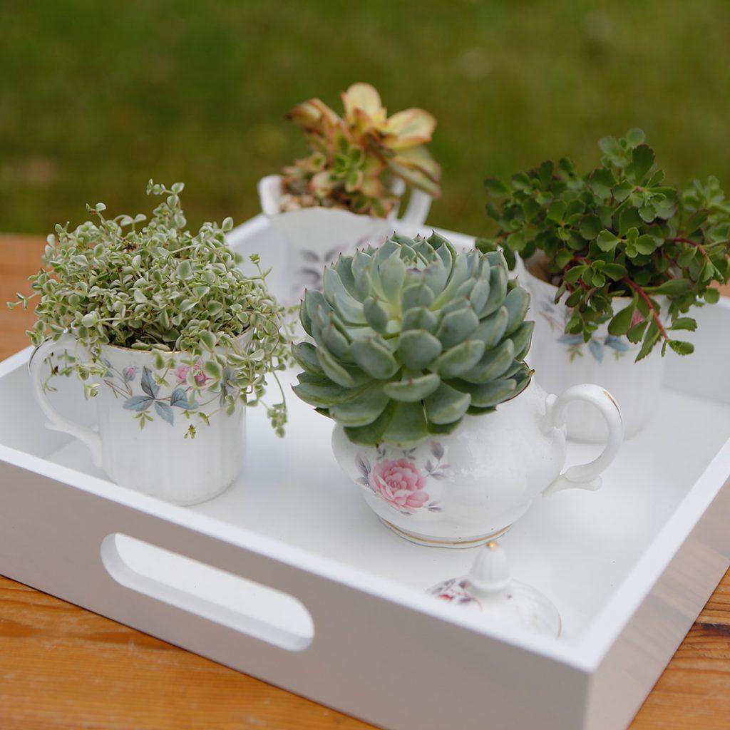 DIY-teacup-garden pop shop america