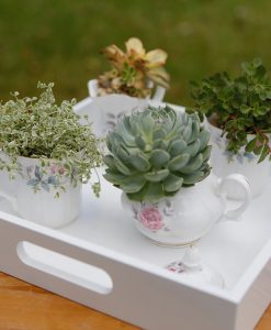 DIY-teacup-garden pop shop america