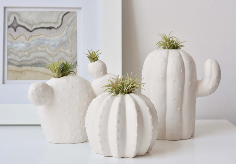 cactus air plant holder pop shop america