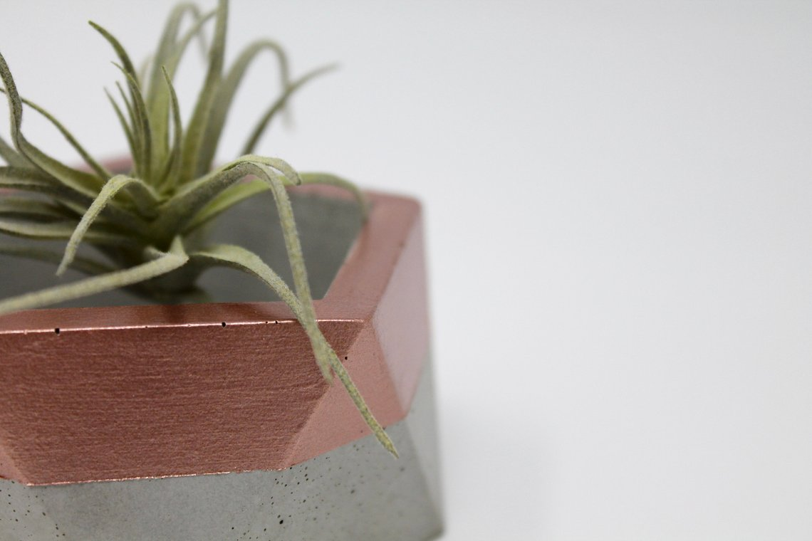 copper and concrete air plant holder pop shop america