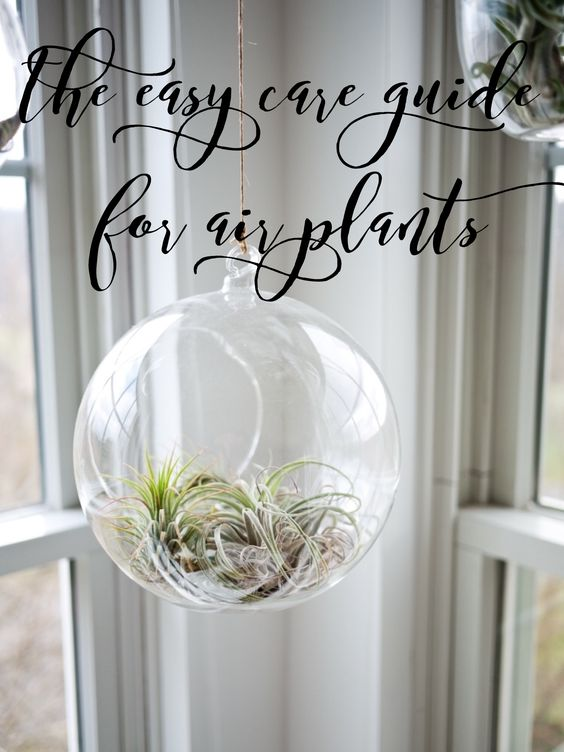 easy air plant care guide pop shop america