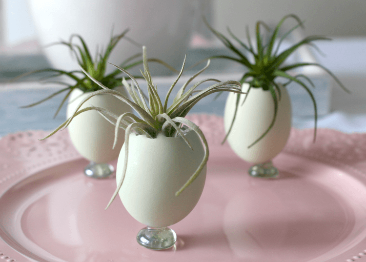 egg shell planters for air plants