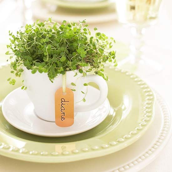 fresh herbs in a teacup indoor container garden